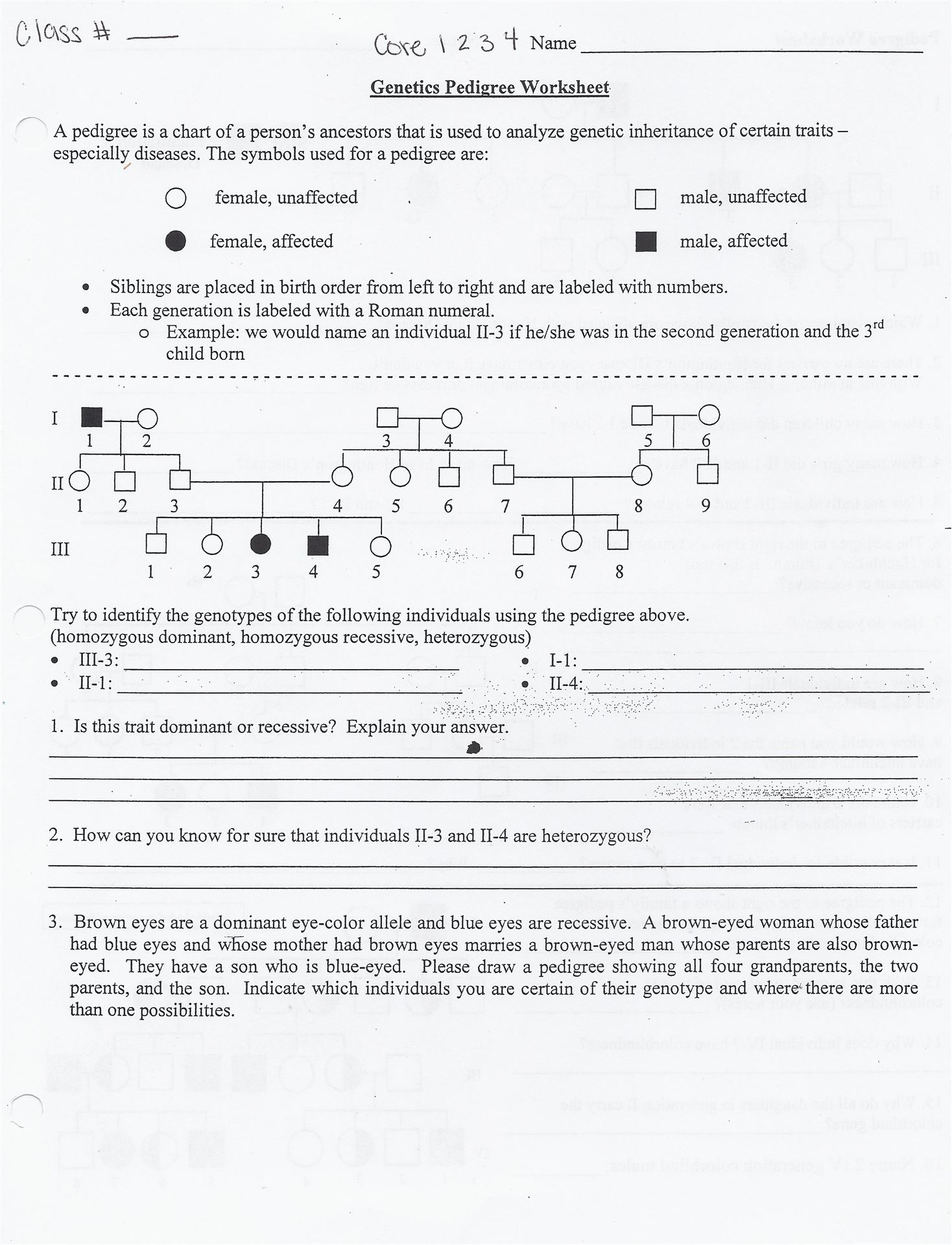 Biology Pedigree Worksheets - Worksheets